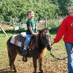 Ponyrides