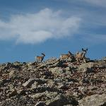 Deer near the summit - seemed to be crossing the mountain