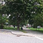 Fontaine et arbres matures