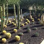 Lots of Desert Plants