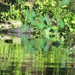 Alligator sunning spot