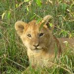 marsh pride cub