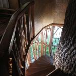 The stairs into the treehouse