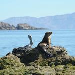 Sea lion & pelican