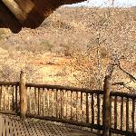 View to the water hole from our room's deck