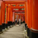 Inari Shrine - red gates (48894461)