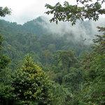 Photo de Jungle Lodge