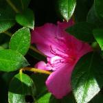 Flower at Masescha