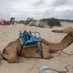 Camelos muito mal tratados...