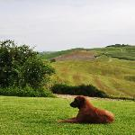Stunning views and the friendly resident dog