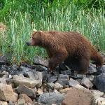 One of the several bears we saw along this shoreline