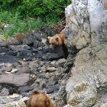 Katmai shoreline - this guy came down to confront another bear