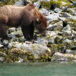 Katmai shoreline - bear viewing