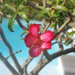 Fleurs des arbustes de la piscine