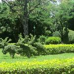 Immaculate Gardens and grounds
