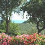 Oltre la cornice delle fioriere...... tutto verde