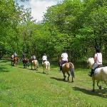 Trekking a cavallo nei dintorni dell'agriturismo
