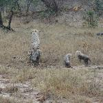 On the last day we spotted cheetah with her cubs