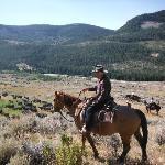 Cowboy Bob Herding Cattle