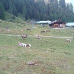 Alpe Ravina