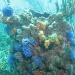 Amazing coral