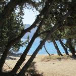 la spiaggia nel bosco dei cedri