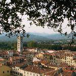 View from Guinigi Tower