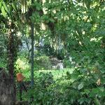 Garten auf der Hinterseite des Hauses.