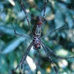 arañas tipicas de la selva, siempre llaman la antecion