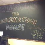 Φωτογραφία: Destination Dogs
