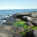 An upper shore tidepool, a feature of the Plankton, Periwinkles and Predators tour.