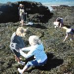 Looking for sea anemones in the rockweed!