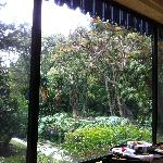 A view from the restaurant - hummingbird tree/African Torripan