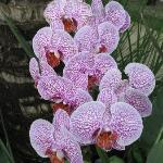 Loved the Orchids in Johns garden