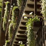Fleurs aux balcons