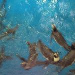 ペンギン食事中