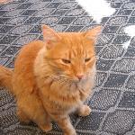 Max, le chat le plus malheureux du maroc ((-;