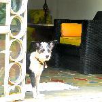 The lovely house dog