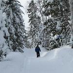 Banadad Trail