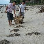 Amarela staff clean the beach every morning