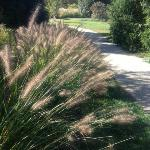 Grasses along the path