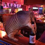 ARMADILLO TEXAS ROADHOUSE