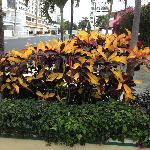 Hotel plantings along street.