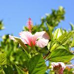 Blütentraum