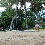 Awesome dogs, kept us company all the way to Las Terrenas