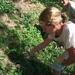 Picking nettles for ravioli!