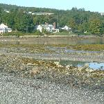 Cottages along the shore in town as seen from the sand bar