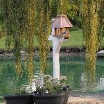 Pond and Bird House