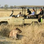 Lion viewing