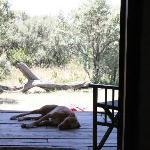 Tanga the dog keeps us company